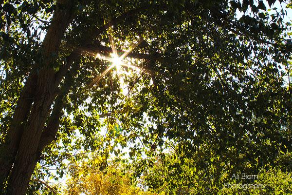 sunburst shining down through the trees