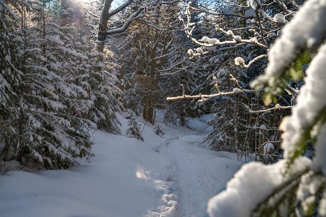 Winterwandern Mauth-Finsterau  Reschbachklause – Siebensteinkopf  Nationalpark Bayerischer Wald 02