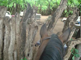 botswana, safari, leiri