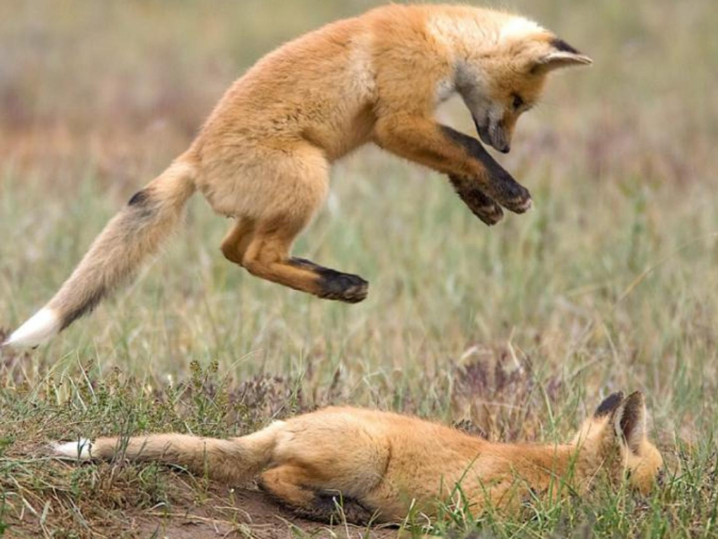 Wild Animal Fights All About Photo