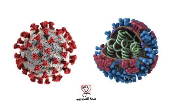 فيروس كورونا المستجد وفيروس الانفلونزا