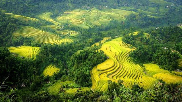 September - rice season is ripe - picturesque Northwest scenery 4