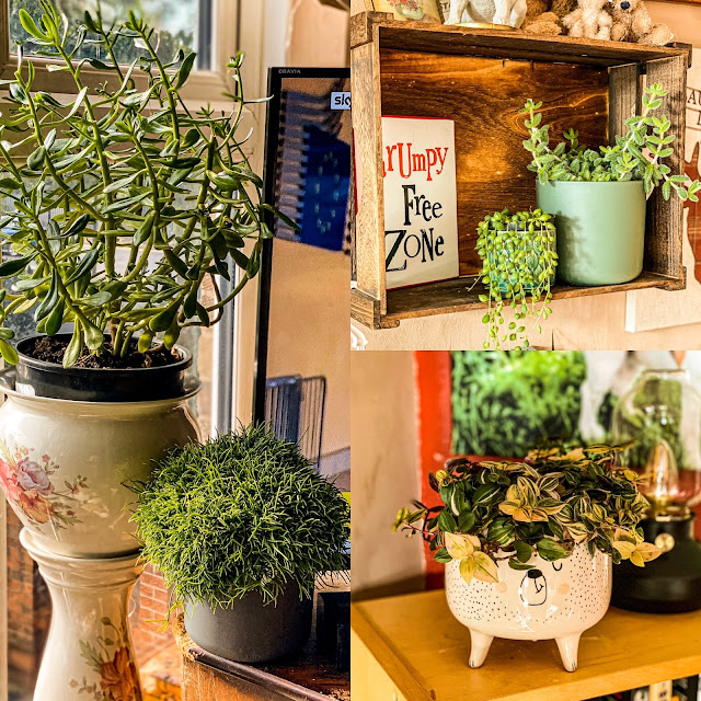 Houseplants, mandy charlton, photographer, writer, blogger, best ways to embrace the cosy season