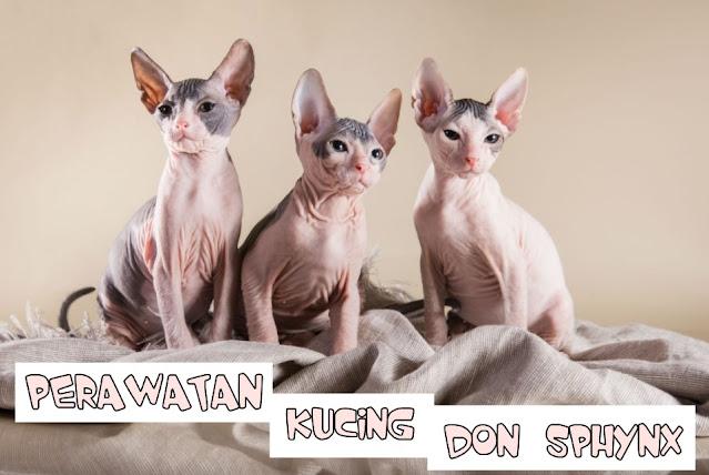 Cara Merawat Kucing Gundul