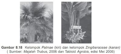 Kelompok Palmae dan Zingiberaceae