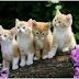 Gửi Thú nuôi - Mèo Đi Mỹ