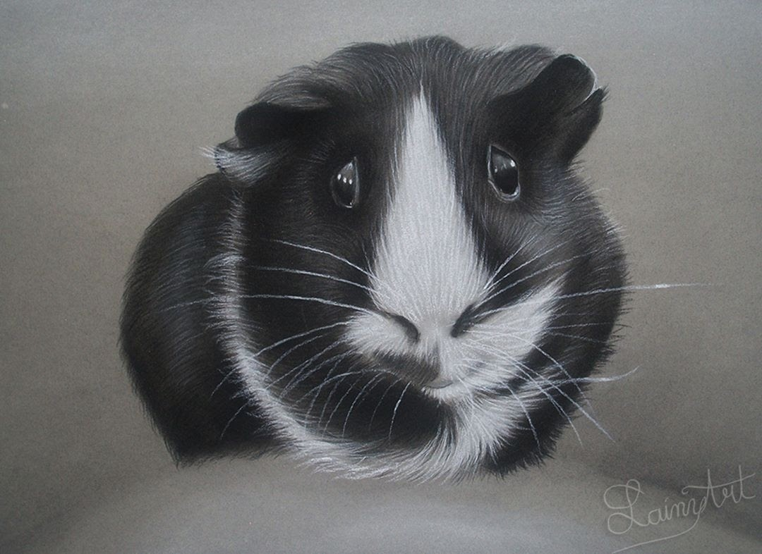 13-Ringo-the-Guinea-Pig-Alaina-Ferguson-Animal-Portraits-Cats-Dogs-and-a-Guinea-Pig
