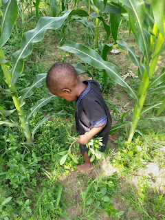 The youngest farmer in the world
