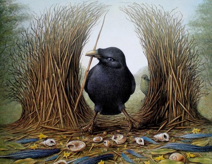 Bowerbird Betina, Hewan Paling Materialistis di Dunia