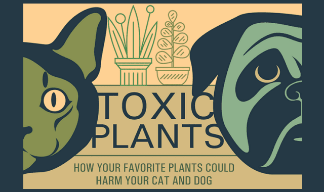 12 most toxic plants to pets