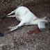 Άρτα:Θανάτωσαν άλογο σε συνοικισμό του Μεσόπυργου ...