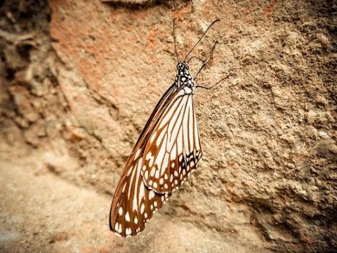 Butterfly Full HD Wallpaper Free stoke [ Download ]