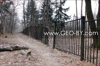 Щемыслица. Дубрава Чапского. Согнутый стволами деревьев забор