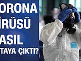 Koronavirüs Nedir (corona virüs) Hakkında Neler Biliniyor?