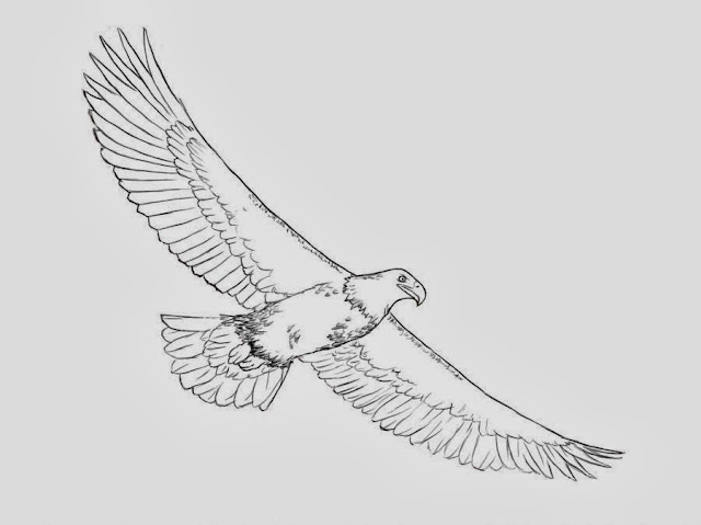 eagle printable coloring pages - colour drawing free wallpaper eagle coloring drawing free