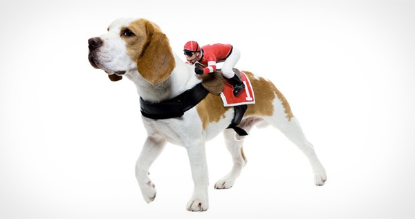 Paper Magic Jockey Dog Rider Pet Costume