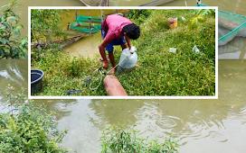 """10 RIBU BIBIT IKAN TERJUAL, LASONO : """" Kalau Kakak Fokus Ikan Lele, dan Saya Fokus Ikan Nila """""""