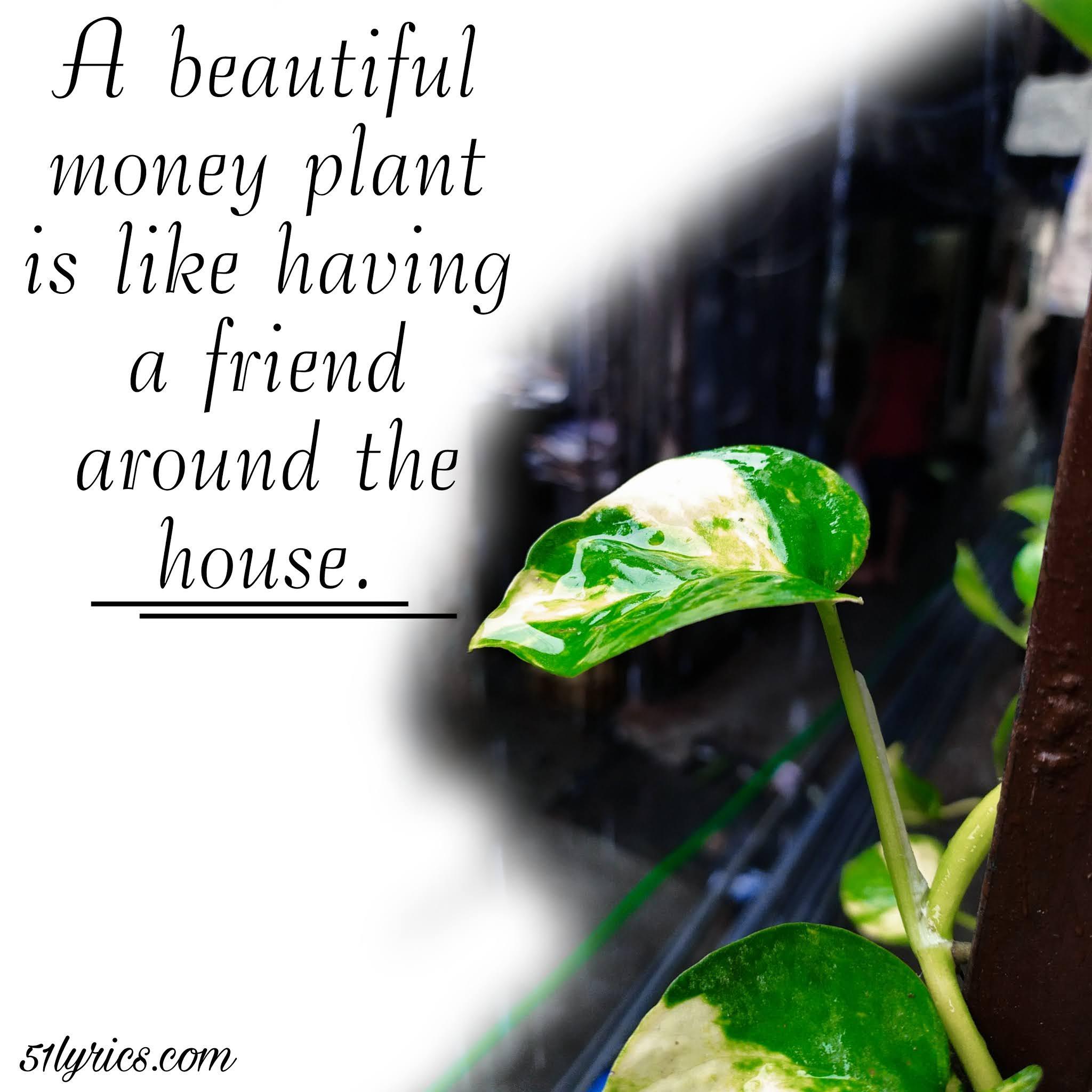 Money plant captions, best captions, captions for Instagram, pick up lines for Instagram, Captions for Ig, money plant quotes, captions for plant lover