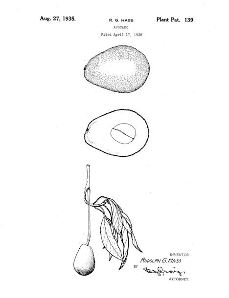 Patente del aguacate Hass