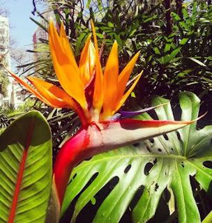 Ave del Paraíso en el Botánico
