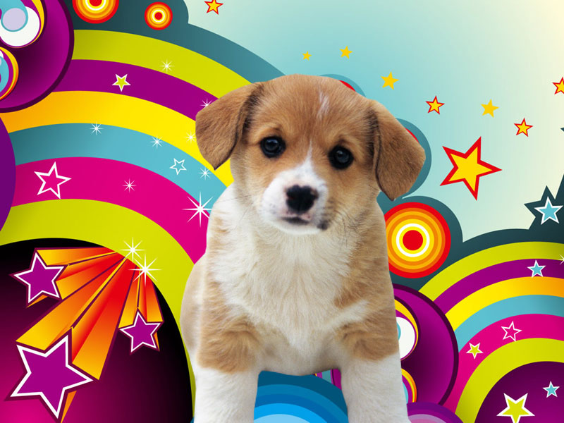 Cute Puppies Wallpaper Backgrounds Wallpapers Download Puppies Wallpapers Download