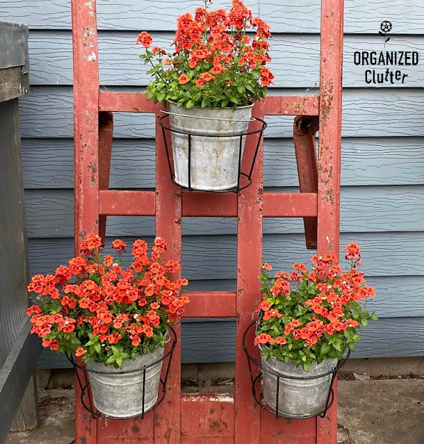 Photo of diascia orange plants in small buckets hanging on a dolly.