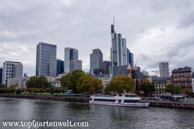 Blick auf Mainhatten und den Main - Blog Topfgartenwelt