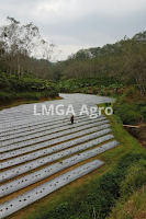 lahan,ladang,pertanian,ladang pertanian,lahan pertanian,budidaya tanaman,lmga agro