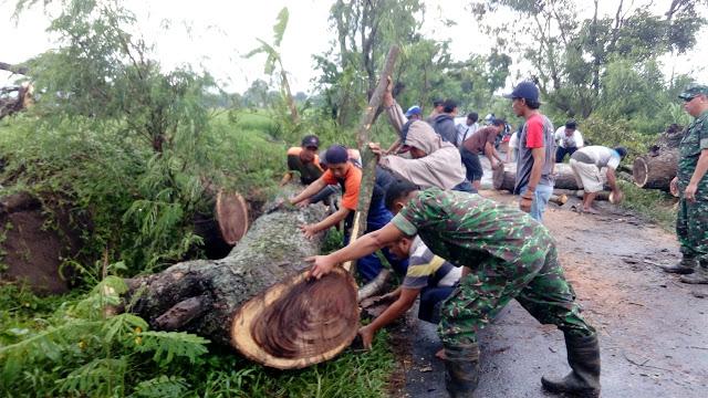 Koramil 12 Manisrenggo dan Relawan Evakuasi Pohon Tumbang
