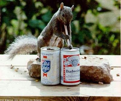 Lustiges Eichhörnchen trinkt Budweiser Bier