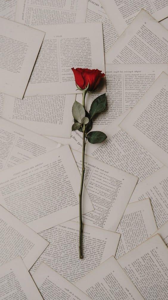 rosa rossa su fogli di un libro