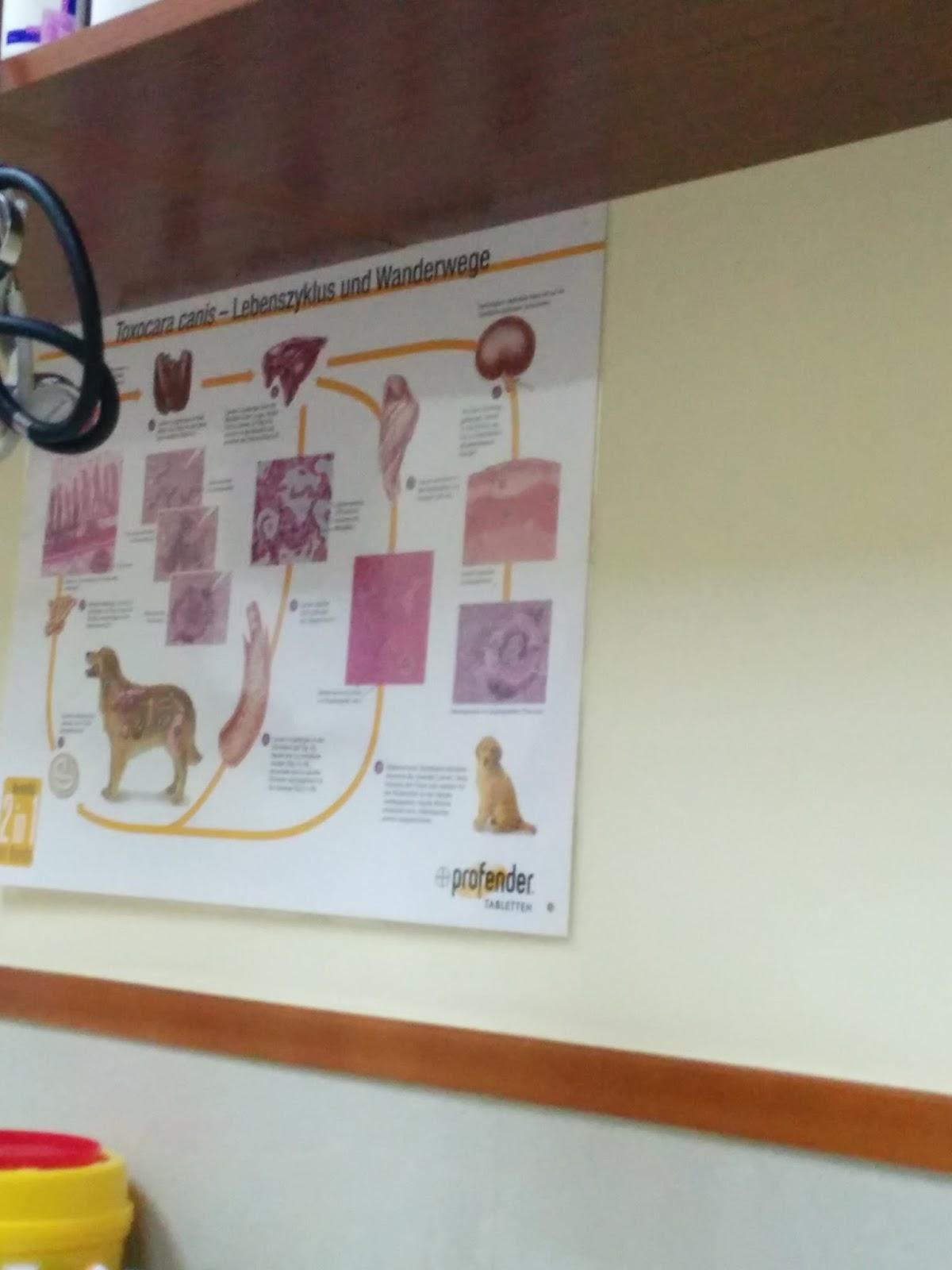 Deutsche Poster In Chinesischen Tierkliniken