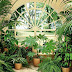 Комнатные растения. Интересные факты