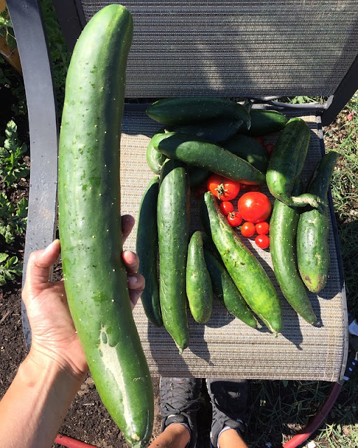 california-garden-vegetables