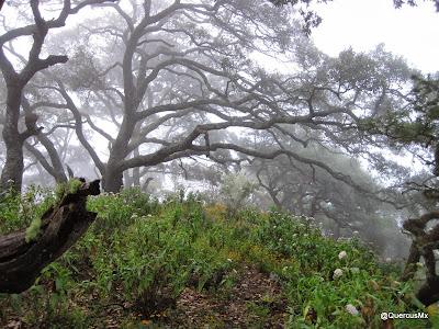 Cerro Grande de Ameca - Vegetación
