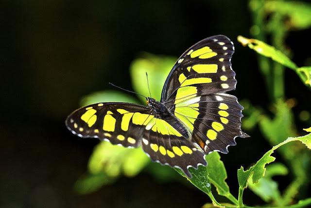 صور اجمل الفراشات الملونة