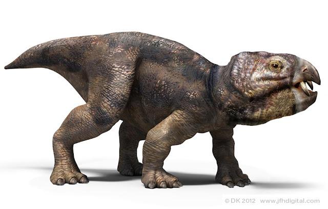 سكوتاصور