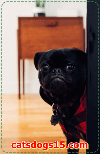 Research the maximum crucial hints for retaining your dog wholesome and secure