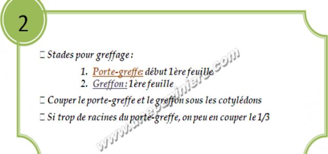 greffage concombre2