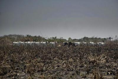 Polícia identifica fazendeiros suspeitos de provocar queimadas no sudeste do Pará