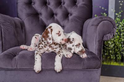 Cachorros fofos: seleção de 40 imagens que vão derreter seu coração