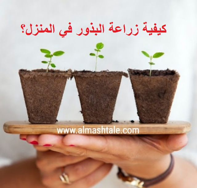 زراعة البذور في المنزل