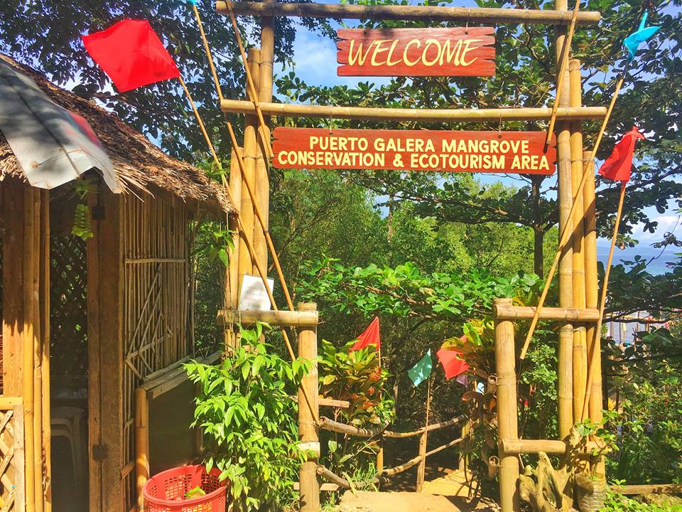 puerto galera mangrove and ecotourism area blog review