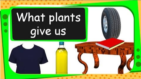 Important Things we get from plants and Trees