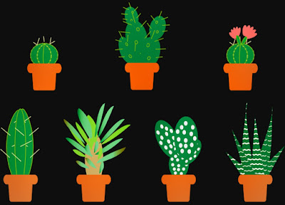 Cara Merawat Tanaman Hias Kaktus Hiasan Rumah