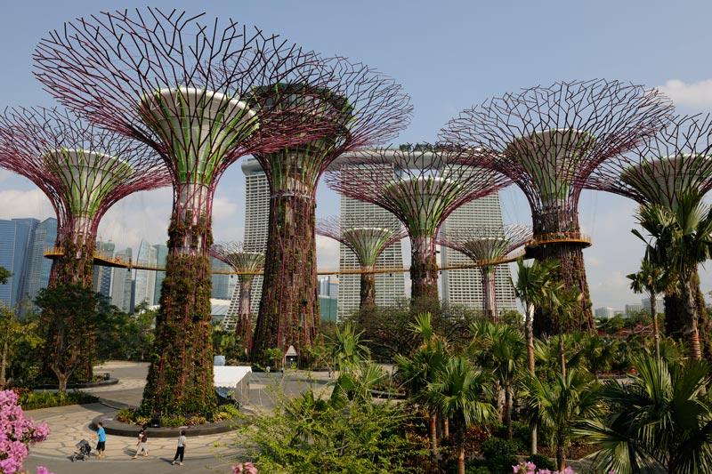 Supertree Grove Singapore
