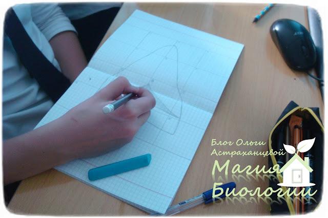 магия-биологии-масштабирование-реальных-размеров