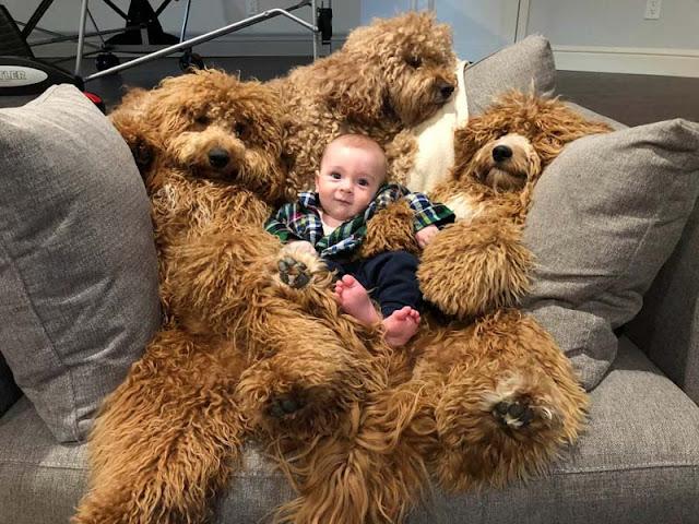 У малыша Тео чудесные няньки, которые очень напоминают плюшевых медведей!