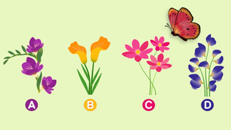 A flor que a borboleta pousará revela seu parceiro ideal