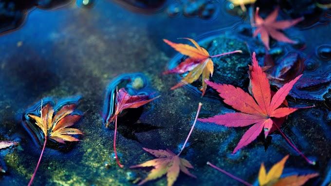 Folhas de Maçã papel de Parede